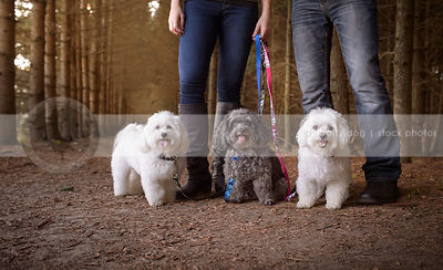 three little groomed dogs posing with owners legs in forest