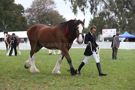 HOY_220314_Clydesdales_2366