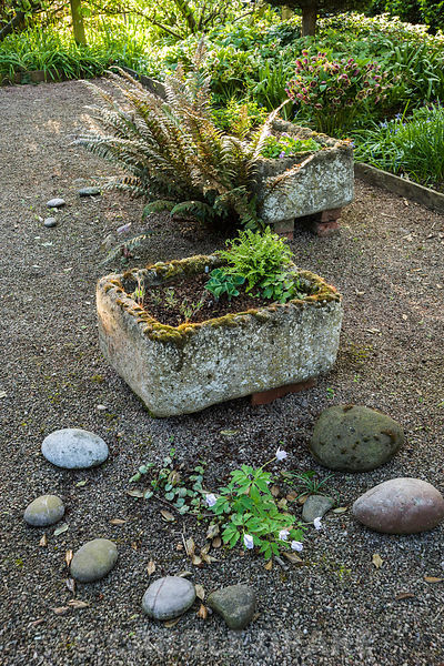 Tufa containers in the shade garden at the front of the house feature choice ferns and alpines including Woodsia alpina, W. intermedia and Anemonella thalictroides 'Shoaf's Double'.