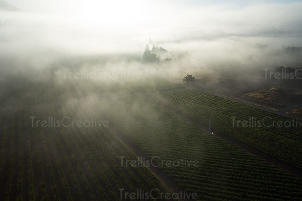 add to stock, agriculture, California, Calistoga, fog, foggy morning, landscape, misty morning, Napa Valley, rolling hills, stock, summer, trellised vines, valley floor, vines, vineyard, vineyard rows, wine country