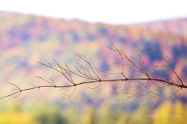 ADIRONDACK MOUNTAINS FALL AUTUMN COLORS NATURE ABSTRACT