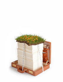 Briefcase with grass