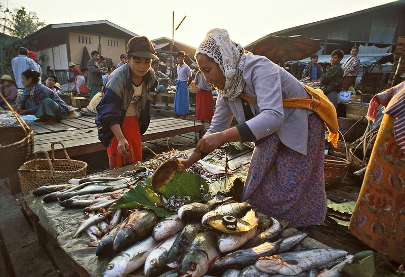 Michael freeman photography fish market for Bud s fish market