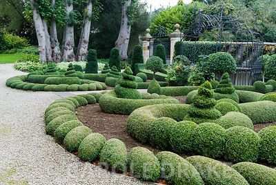 Clipped box and yew in the Parterre Garden with standard laurel and trained pyracantha on the wall behind. Gates and gazebo by Richard Overs. Bourton House, Bourton-on-the-Hill, Moreton-in-Marsh, Glos, UK