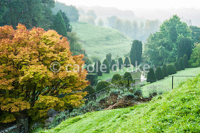 View down over the Canal Garden framed by yellow acer and clipped yews. Mapperton House, Beaminster, Dorset, UK