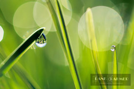 Grass with dewdrops - Europe, Germany, Bavaria, Upper Bavaria, Munich - digital