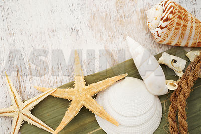Starfish and seashells with old wood background