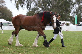 HOY_220314_Clydesdales_2367