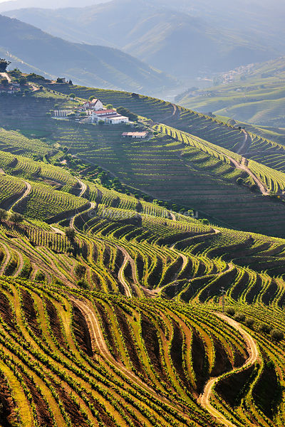 Terraced vineyards in the Douro region, a Unesco World heritage site. Portugal