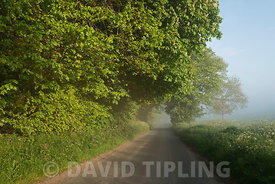 Country lane on misty morning in spring Great Walsingham Norfolk