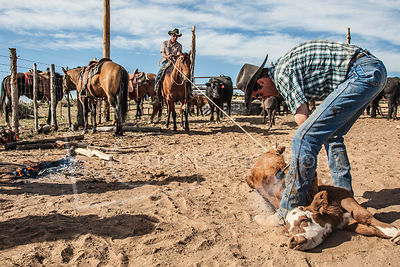 Mancos Cowboys and Cowgirls photos