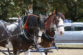 HOY_230314_clydesdales_3583