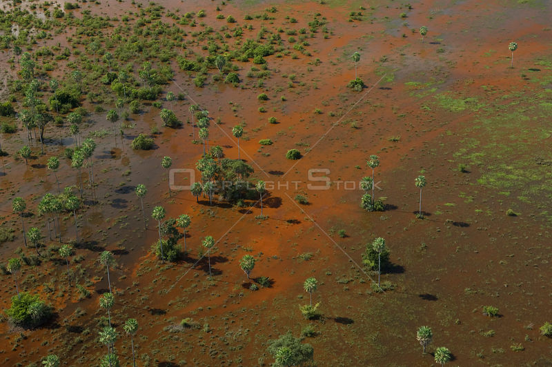 "Aerial view of the floodplain of the Beni, with waters full of red algae, and ""Caranday"" palm trees (Copernicia alba), Southeast of Trinidad city, Beni Department, Northwestern Bolivia."