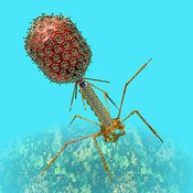 Bacteriophage T4
