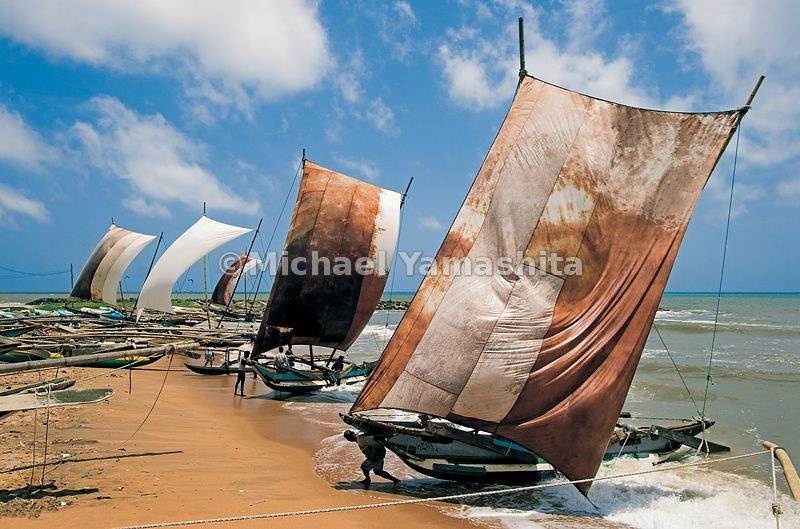 Fishermen on Negombo Beach in Sri Lanka, haul in their dugout outrigger sailing canoes afer a day at sea.