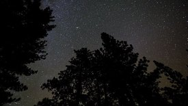 Medium Shot: Vertical Twisting Night View Of Pine Tree Tops Leading Into A Milky Way & Translucent Weather
