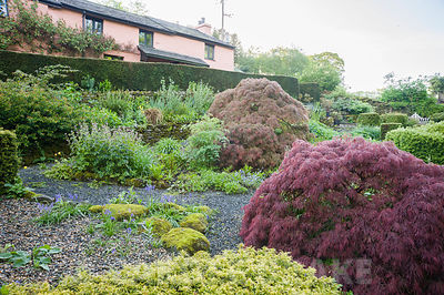 The 'best' garden at the front of the house is the most formal area of the garden, with clipped hedges of yew and box framing a mix of herbaceous plants and shrubs including varieties of Acer palmatum Dissectum group. Windy Hall, Windermere, Cumbria, UK