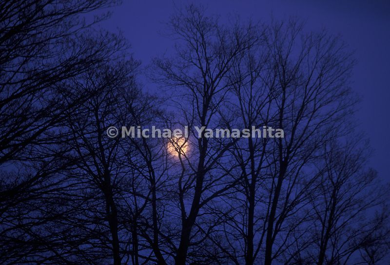 Full moon behind the trees in the Northeast Kingdom of Vermont during winter.