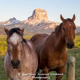 Chief Mountain Horses