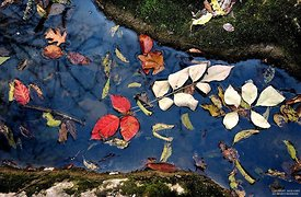 Leaves in a stream, Beech Grove