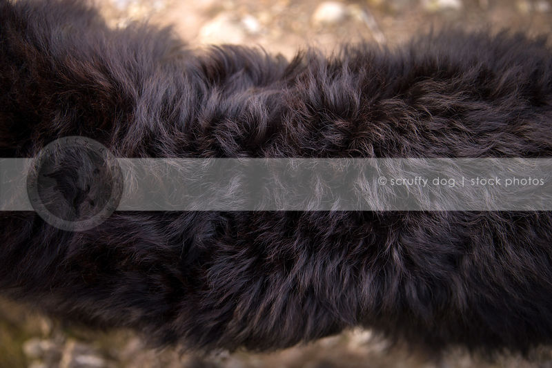 closeup of black fur of large dog lying on ground