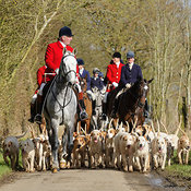 The Cottesmore Hunt at Newbold 23/2 photos