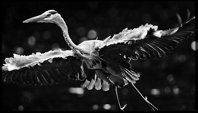 4863-Bird_Laurent_Baheux