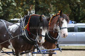 HOY_230314_clydesdales_3584