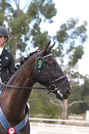 SI_Festival_of_Dressage_310115_prizegivings_1452