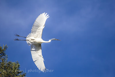 Egret, California