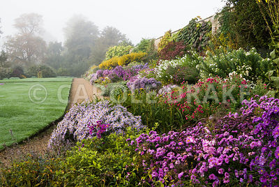 The Classical Herbaceous Border full of asters, tall Solidago 'Golden Wings', rudbeckias and phlox. Waterperry Gardens, Wheatley, Oxfordshire, UK