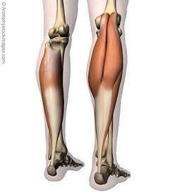 Lower leg images