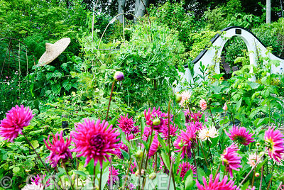 Moon gate seen across dahlias at the end of the vegetable patch. Beggars Knoll, Newtown, Westbury, Wiltshire, UK
