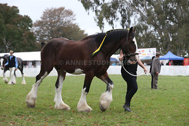 HOY_220314_Clydesdales_2369