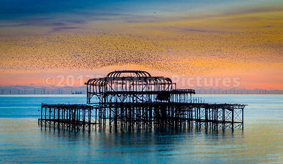 Starling murmuration over Brighton's burnt out West Pier