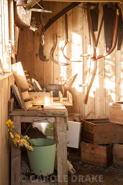 Interior of daffodil packing shed in market garden at Cotehele, Cornwall, UK