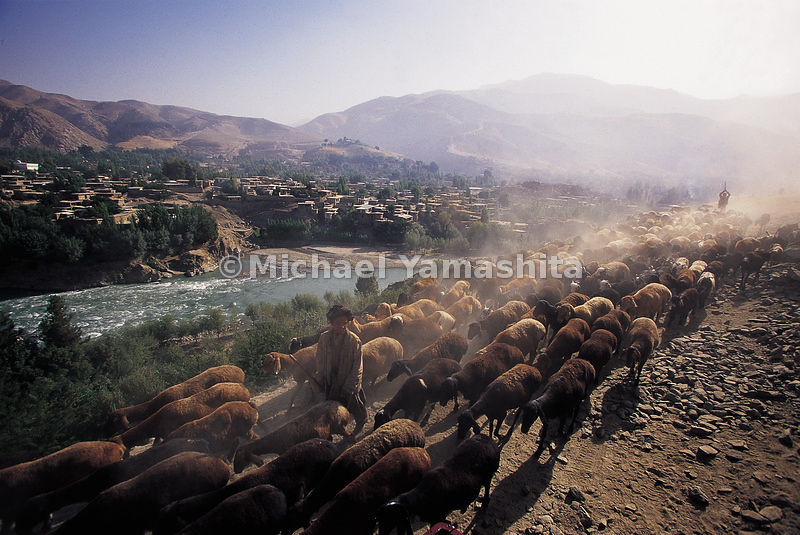 Still plentiful, sheep are one of Feyzabad's few local resources.