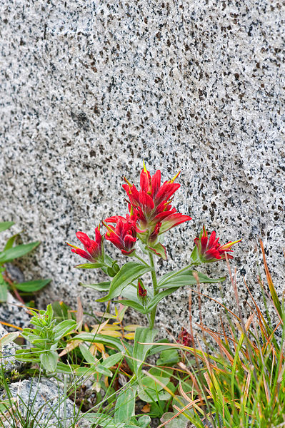 Enchantments Paintbrush