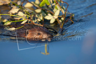 Small Mammals photos