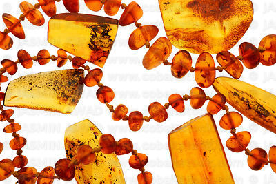 Polished amber pieces with tiny insect fossils with amber beads necklace Studio shot