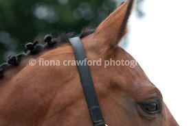 Plaited bay horse