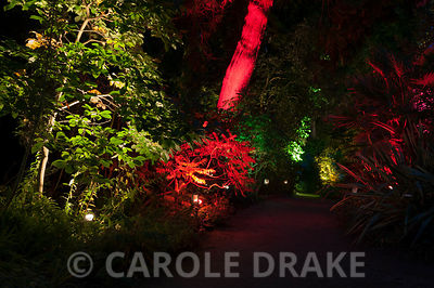A path through illuminated foliage and trees at Abbotsbury Subtropical Garden in October