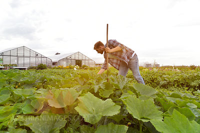 Farmer working in vegetable field