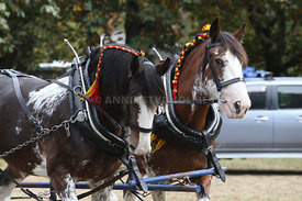 HOY_230314_clydesdales_3585