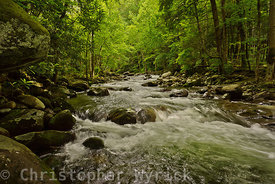 Another beautiful shot looking upstream while standing in Porter's Creek.