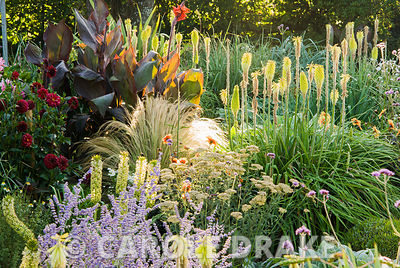 Sunken garden is a mass of colourful flowers in late summer, including kniphofias, cannas, dahlias, eucomis and grasses. Crab Cottage, Shalfleet, Isle of Wight, UK