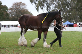 HOY_220314_Clydesdales_2370