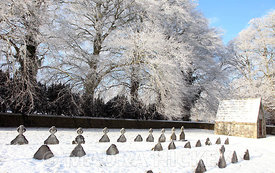 Maynooth College grave yard..08.01.09..Pic. Maura Hickey/086 8541130.