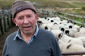 Hill farmer standing in front of flock of sheep in sheep pens.
