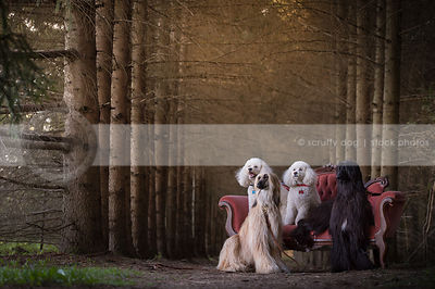 family of four dogs with antique settee in pine forest